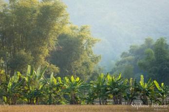 mai-chau-paysage-bananier-bambou