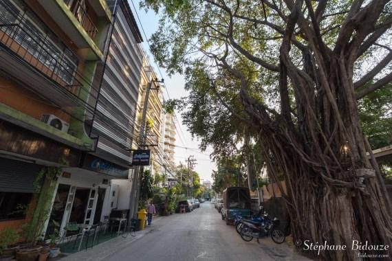 bangkok-hotel-california-soi-30-arbre-figuier