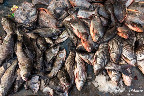 poisson-frais-birmanie-mandalay