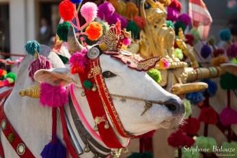 boeuf-birmanie-décoré