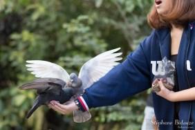 pigeon-nourrissage