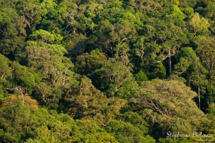 forêt-mai-pai-ko-lanta