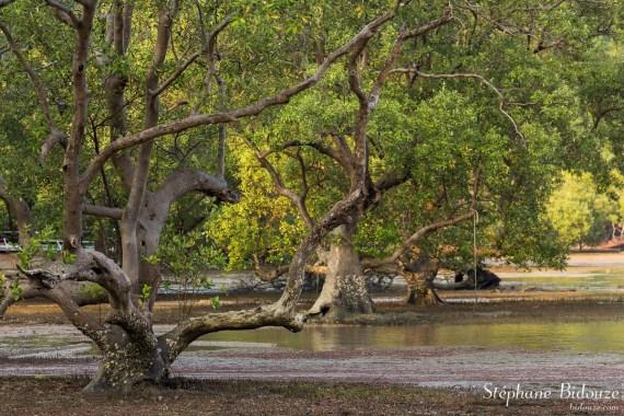 mangrove-palétuviers-railay-est