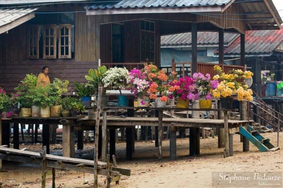 bougainvillées-thailande