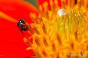 Mini abeille noire