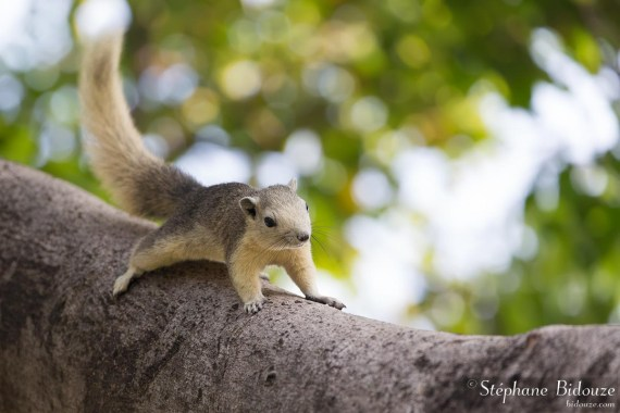 ecureuil-variable-bangkok
