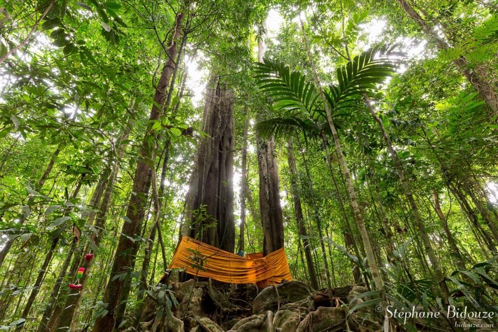 L'arbre Chai