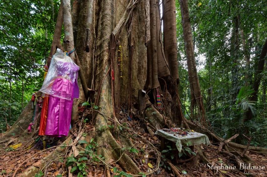 offrandes-arbre-sacreé-thailande