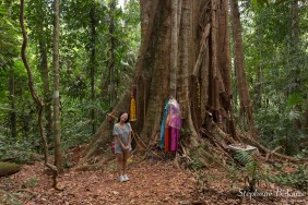 makka-tree-thailande