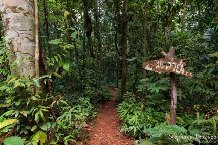 Chemin vers l'arbre Makka