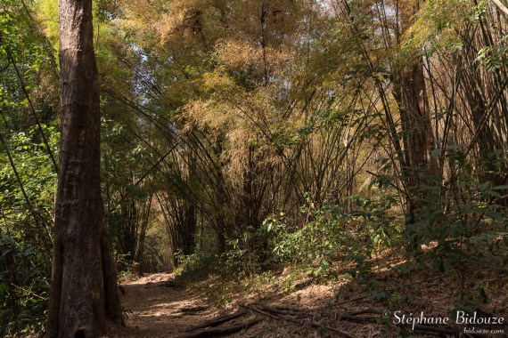 Chemin de bambous