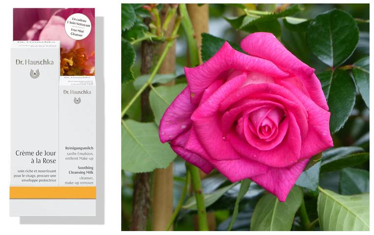 creme-de-jour-a-la-rose-Dr.-Hauschka-Bidule-et-cocotte