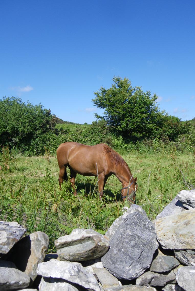 CLONAKILTY-IRLANDE-COTE-SUD-CHEVAL
