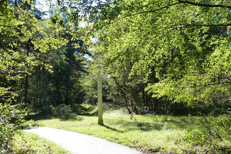 Balade-à-vélo-en-forêt-de-compiegne-2