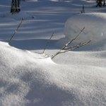 積雪沈降力