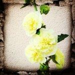Backstage Instagram… pic et pic et colegram #août2013