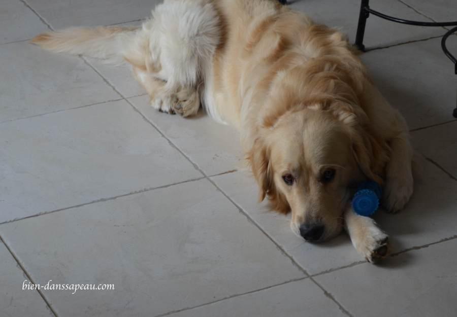 intégrer-son-chien-dans-sa-famille-blog-favoris