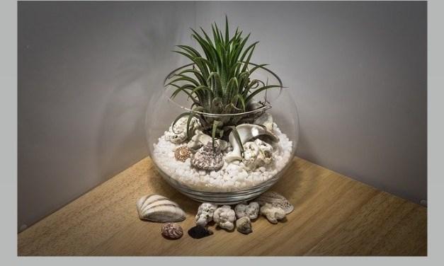 Pour une déco tendance et zen : le terrarium, petit jardin d'intérieur