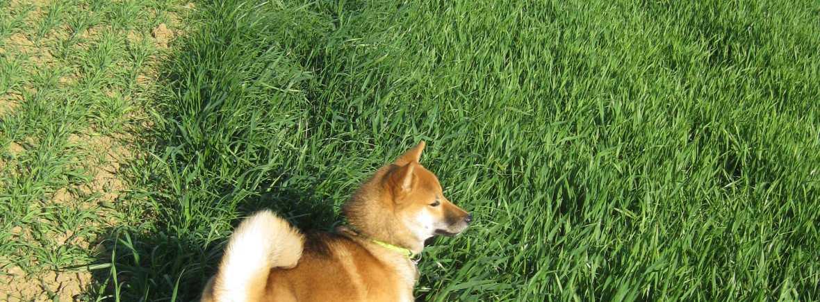 promeneur de chiens 92
