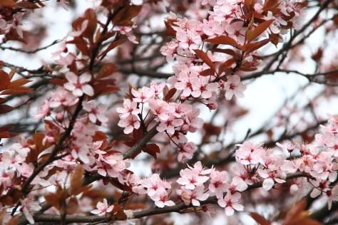 printemps détox shiatsu nancy stage