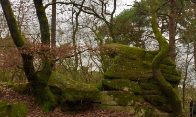 Puissance du Féminin – Cérémonie en forêt avec Camille Sfez – retour d'expérience