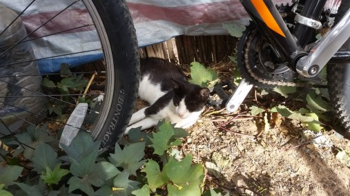 This is one of my cats, Baxter, asleep on my bike pedal