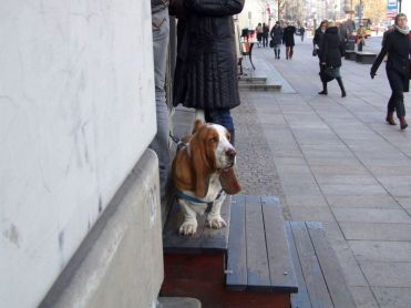 Warsawa_2011_listopad-a_52