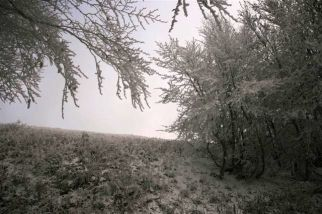 2011_11_wetlinska-s.sznajder_12