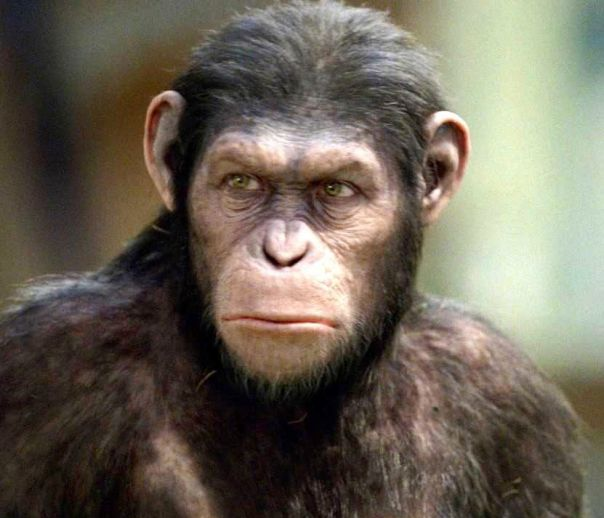 …for the last time, we're apes, not monkeys...