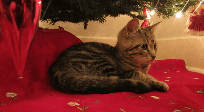 kitten under Christmas tree - Audacious Eleven Episode 114