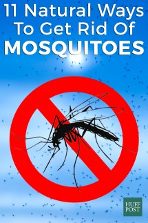 How to Get Rid Mosquitoes