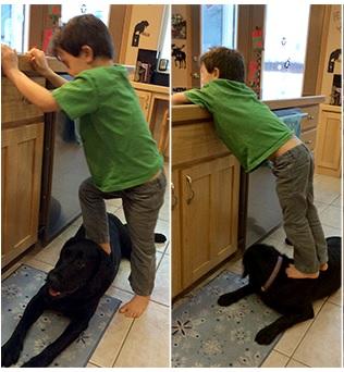 sarah palin dog abuse