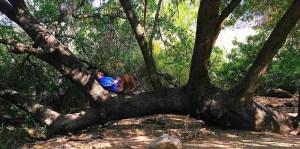 the tie down tree