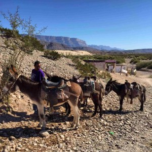 Saddled up our donkeys and road to town Boquillas Mexico
