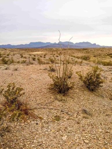 desert big bend