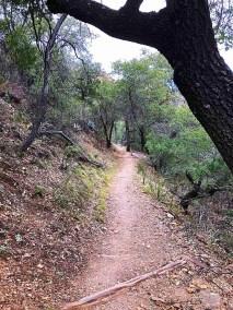 Laguna Meadows Trail
