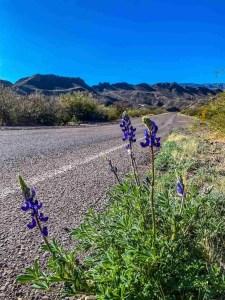 Big Bend Ranch RR 170 Blue Bonnets