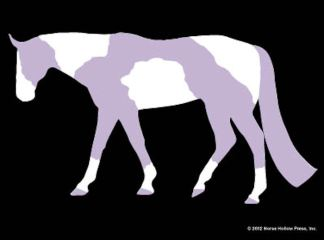 Purple Tobiano Window Sticker