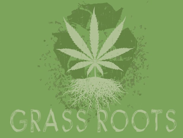 Image result for Cannabis roots