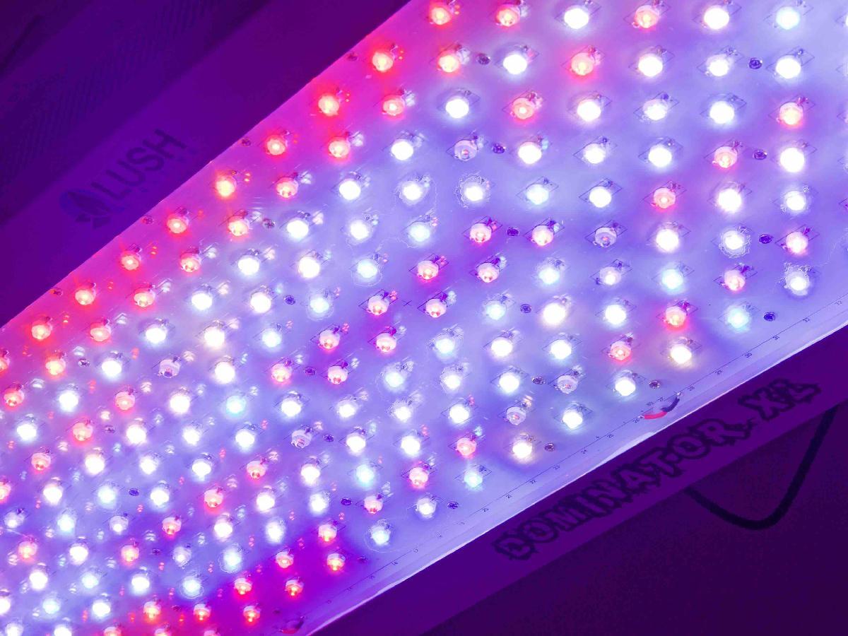 Bbm Led Lights