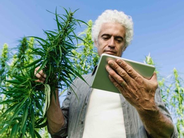 Tips & Tricks Improve Cannabis Knowledge