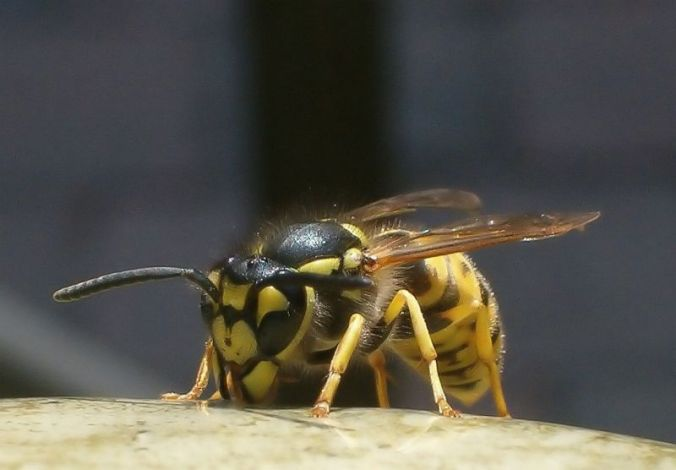 wasp observations