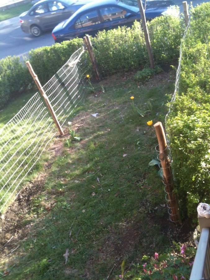 welded wire fence with posts