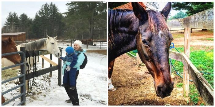 retired-horses-usa-bigcitymums-org