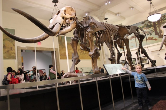 American-museum-of-natural-history-bones-bigcitymums-org