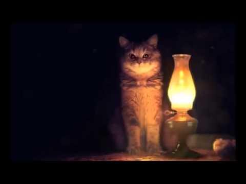 Ламповый кот, что такое ламповость