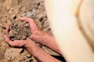 Grow more food and mitigate climate change? Agricultural soil data could help