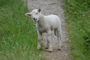 If Mary has a little lamb, who should know about it?