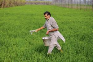 Making crop insurance work for Indian farmers