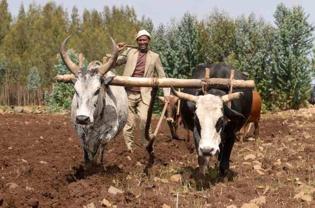 A wheat self-sufficiency roadmap for Ethiopia's future